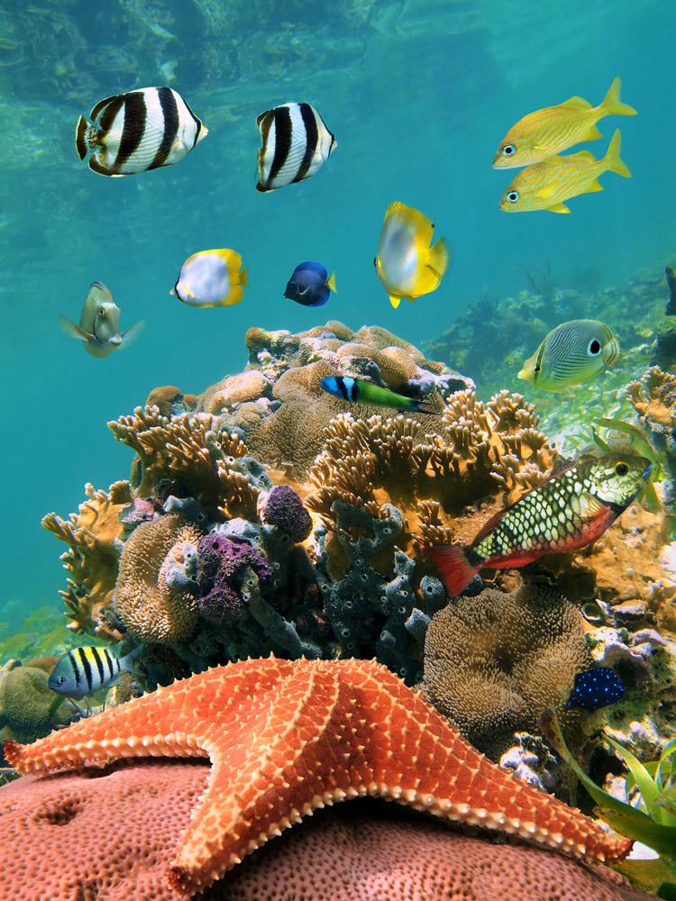 морские картинки которые двигаются летних фотографий, снятых