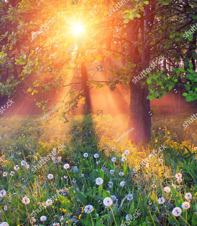 Открытки лучи солнца, днем