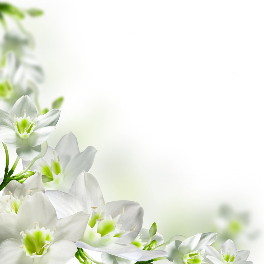 Главная цветы фотообои белые цветы