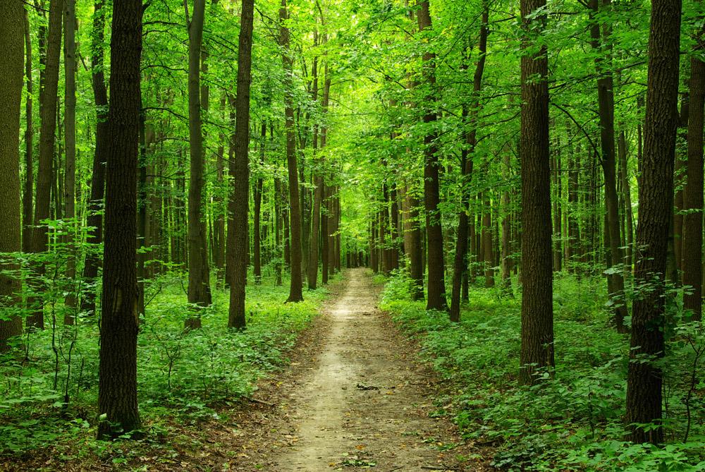 Главная лес фотообои русский лес