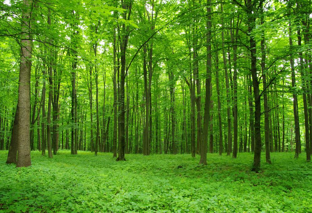 На рабочий стол обои зимний лес