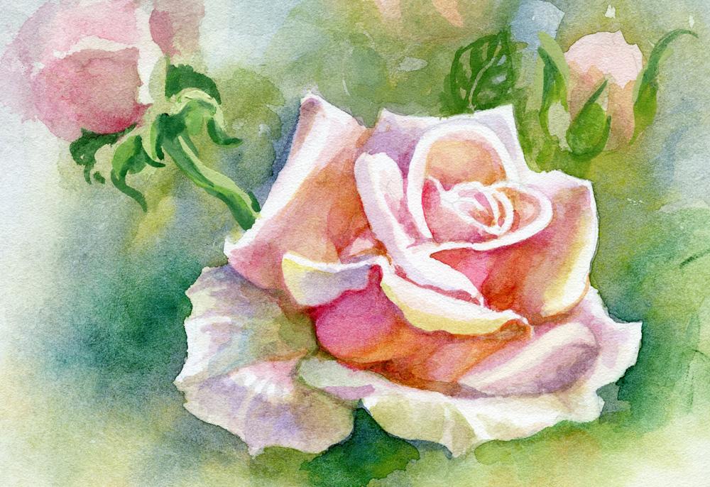 Рисованная роза акварелью